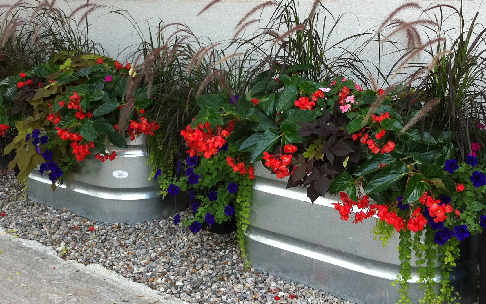 Plants for a north facing garden -  Facing North For Garden Plants Container Kick Life Retail Is After Season Hortus Late With There