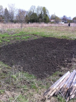 allotment May 2011 012